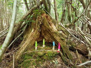 Wichtel im Wald