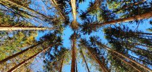 Perspektivenwechsel beim Waldbaden