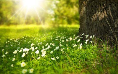Märchenhafter Sommerwald